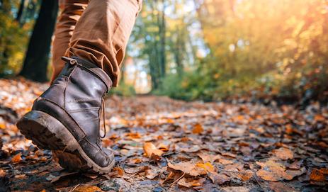 Wandelen in het bos in de herfst